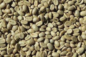 Plantation de café - Costa Rica